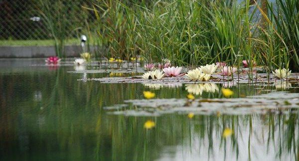 swimming-pond-1529485_640